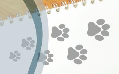 3 Razones para tener un blog si tienes un proyecto relacionado con el medio ambiente o la vida de los animales